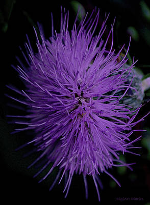 Burst Of Violet Art Print by DigiArt Diaries by Vicky B Fuller