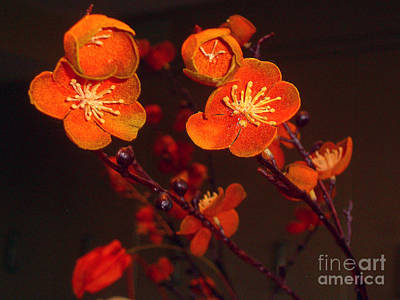 Photograph - Bursting Into Bloom by Merton Allen