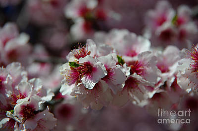 Photograph - Bursting Into Spring by Vicki Pelham