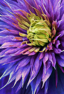 Gorgeous Photograph - Bursting  by Marcia Colelli