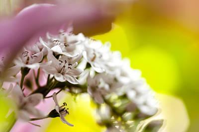 Photograph - Bursting Out by Christi Kraft