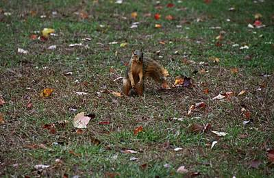 Photograph - Burying The Snack II by Michiale Schneider
