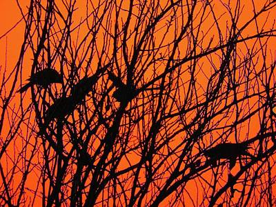 Photograph - Bush Birds by Mark Blauhoefer