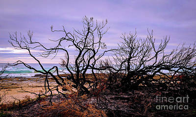 Photograph - Bush Fire By The Beach by Lexa Harpell