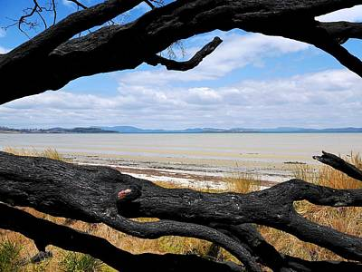 Photograph - Bush Fire Trees And Beach 1 by Lexa Harpell