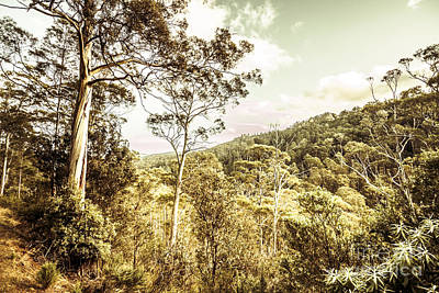 Gumtree Photograph - Bush Views And Lookouts by Jorgo Photography - Wall Art Gallery