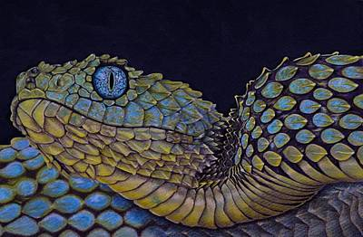 Viper Drawing - Bush Viper  by Biophilic Art