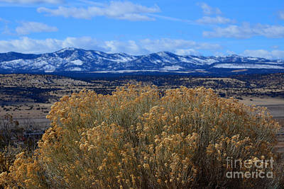 Photograph - Bush With A View by Robert WK Clark