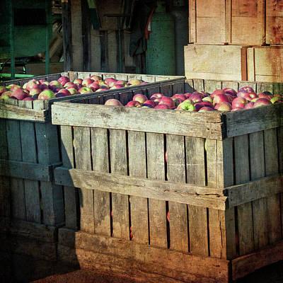 Photograph - Bushel Of Apples - Vintage Art by Joann Vitali