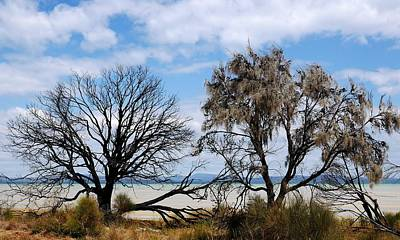 Photograph - Bushfire Trees And Beach 2 by Lexa Harpell