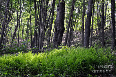 Photograph - Bushkill Falls Ferns by Andrew Dinh