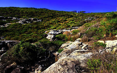 Photograph - Bushland Of North Head Sydney by Miroslava Jurcik