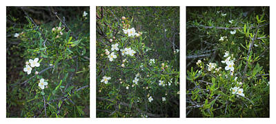Photograph - Bushrue Flower Collage by Alexander Kunz