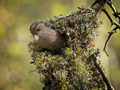Photograph - Bushtit Building Nest by Inge Riis McDonald