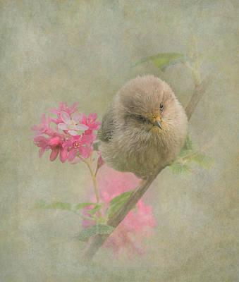Photograph - Bushtit Cuteness by Angie Vogel