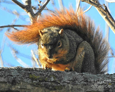 Photograph - Bushy Tail by Kathy M Krause