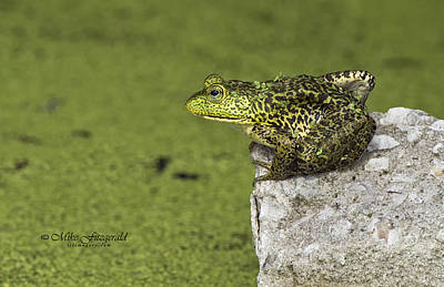 Photograph - Buster On The Rocks by Mike Fitzgerald