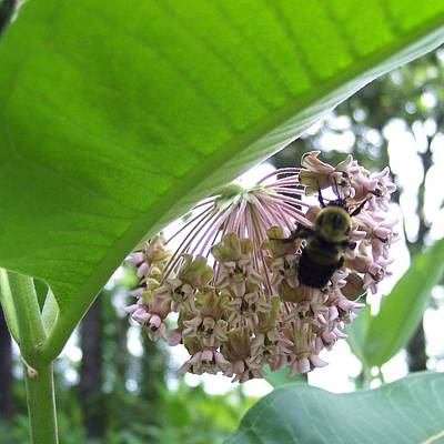 Busy As A Bee Art Print by Anna Villarreal Garbis