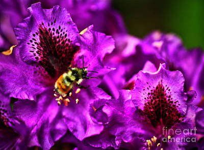 Photograph - Busy As A Bee by Bruce Block