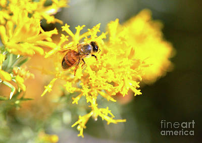 Photograph - Busy As A Bee by Debby Pueschel