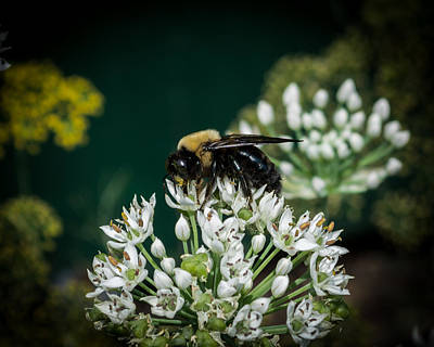 Photograph - Busy As A Bee by Kenneth Cole
