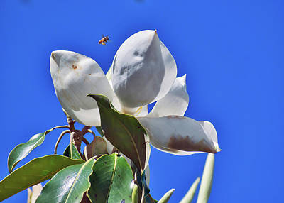 Photograph - Busy As A Bee by Robert Brown