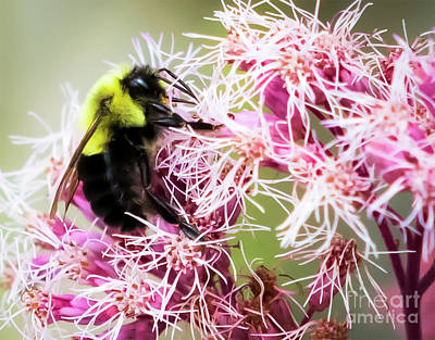Photograph - Busy As A Bumblebee by Ricky L Jones