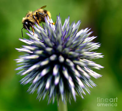 Photograph - Busy Bee 1 by Terry Elniski