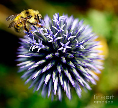 Photograph - Busy Bee 3 by Terry Elniski