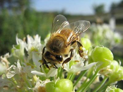 Bee Photograph - Busy Bee 5 by Rebecca Shupp