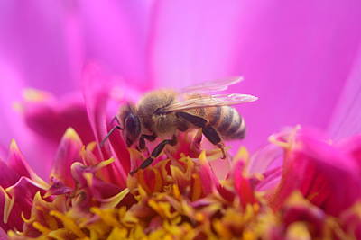 Photograph - Busy Bee by Bonnie Bruno