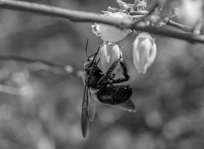 Photograph - Busy Bee Bw by Keith Smith