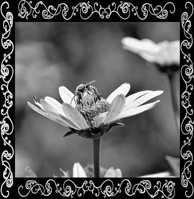Photograph - Busy Bee Bw by Maria Urso