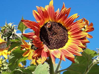 Photograph - Busy Bee by Elisabeth Dubois