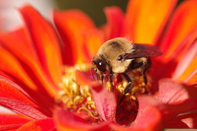 Photograph - Busy Bee II by Greg Graham