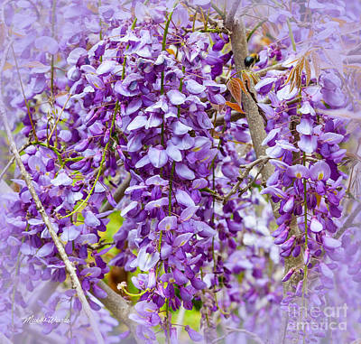 Photograph - Busy Bee In Wisteria Flowers by Michelle Wiarda