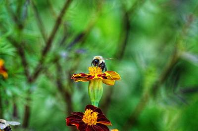 Photograph - Busy Bee by Joseph Caban