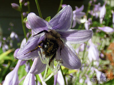 Photograph - Busy Bee by Leara Nicole Morris-Clark