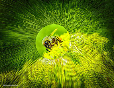 Photograph - Busy Bee  by LeeAnn McLaneGoetz McLaneGoetzStudioLLCcom
