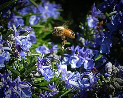 Digital Art - Busy Bee by Max DeBeeson
