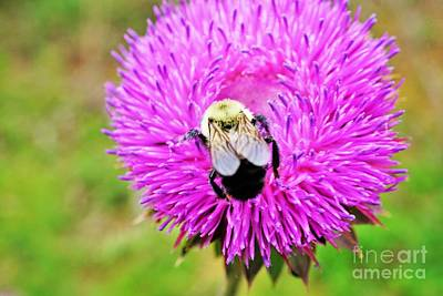Photograph - Busy Bee by Merle Grenz