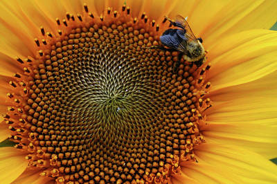 Busy Bee Art Print by Mike Martin