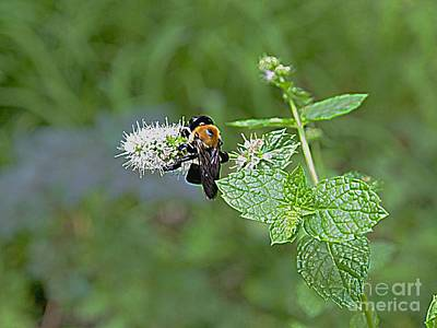 Photograph - Busy Bee by Nancy Kane Chapman