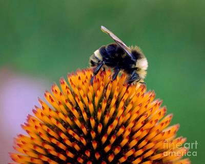 Digital Art - Busy Bee by Patricia Strand
