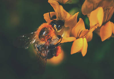 Photograph - Busy Bee by Pixabay