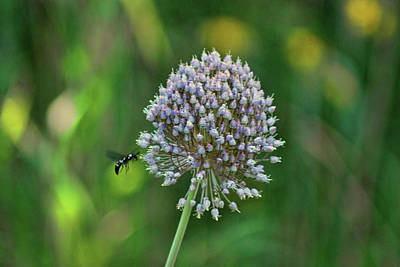 Photograph - Busy Bee by Rick Friedle