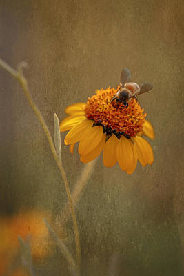 Photograph - Busy Bee by Susan Rissi Tregoning