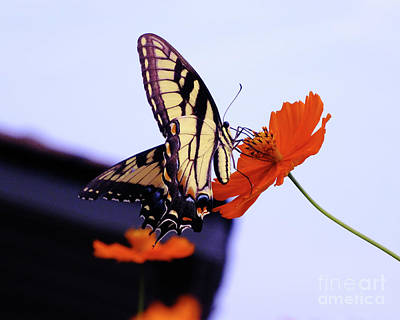 Photograph - Busy Butterfly by Scott Cameron