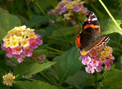 Art Print featuring the photograph Busy Butterfly Side 1 by Felipe Adan Lerma