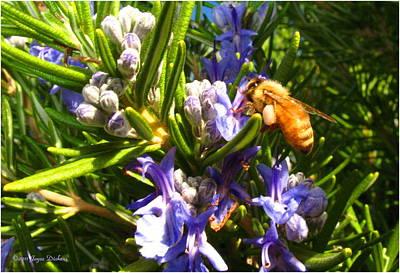 Photograph - Busy Rosemary Honeybee by Joyce Dickens